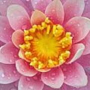 Pink Art Print by Karen Walzer