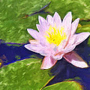 Pink Lotus At Waikoloa Art Print