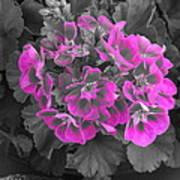 Pink Paridise Art Print