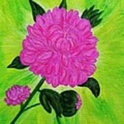 Pink Peony Art Print