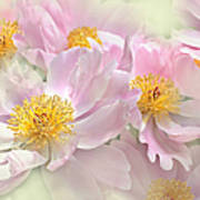 Pink Peony Flowers Parade Art Print