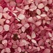 Pink Petal Art Print