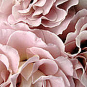 Pink Petal Profusion Art Print