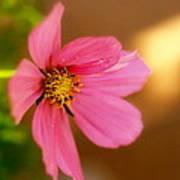 Pink Petals Art Print by Alexandra  Rampolla