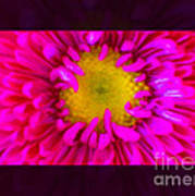 Pink Petals Envelop A Yellow Center An Abstract Flower Painting Art Print