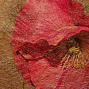 Pink Poppy Gold Leaf Art Print