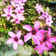 Pink Propellers  Art Print