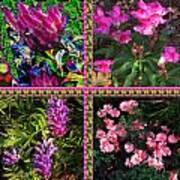 Pink Purple Flowers Captured At The Riverside Ridge At Oakville Ontario Canada Collage Beautiful     Art Print
