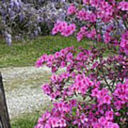 Pink Purple Mississippi Blooms Art Print
