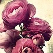 Pink  Ranunculus Art Print