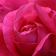 Pink Rose 02 Art Print