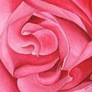 Pink Rose 14-1 Art Print by William Killen