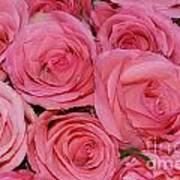 Pink Rose Closeup Art Print