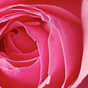Pink Rose Dof Art Print