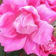 Pink Rose Painting  Art Print