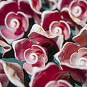 Pink Sea Shells On Cozumel Art Print