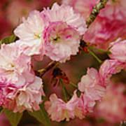 Pink Spring Blossoms Art Print
