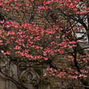 Pink Spring - Dogwood Filigree And Lace Art Print by Georgia Mizuleva