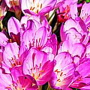 Pink Summer Blossoms Art Print