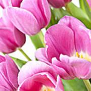 Pink Tulips Art Print by Elena Elisseeva
