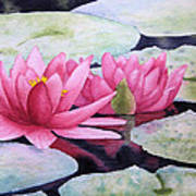 Pink Waterlilies Art Print