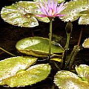 A Waterlily Reflection Art Print