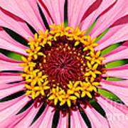 Pink Zinnia Macro Art Print