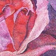 Pinkrose#5-2 Art Print