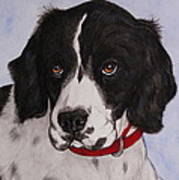 Pippy The Springer Spaniel Art Print