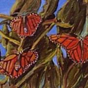 Pismo Monarchs Art Print