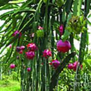 Pitaya Fruit Trees Art Print