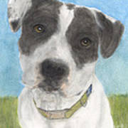 Pitbull Dog Portrait Canine Animal Cathy Peek Art Print