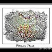 Pitcher Plant Illustration Art Print