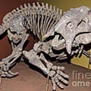 Placerias Fossil Art Print