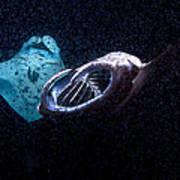 Plankton Feeders Art Print