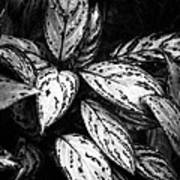 Plant 8659 Art Print