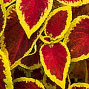 Plant Design Art Print