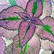 Plant Pattern - Photopower 1211 Art Print