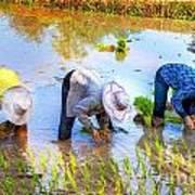 Planting Rice Art Print
