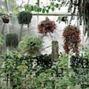 Plants Hanging In A Greenhouse Art Print
