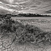 Plants On The Alvord Desert Art Print