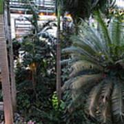 Plants - Us Botanic Garden - 011311 Art Print