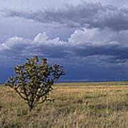 Plateau Cholla New Mexico Art Print