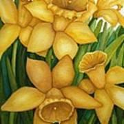 Playful Daffodils Art Print by Vikki Wicks
