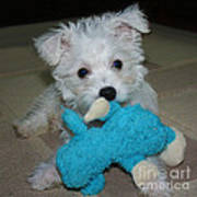 Playful Puppy Art Print