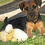 Playmates - Puppy With Toy Art Print