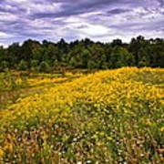 Pleasant Meadow Foreboding Sky Art Print