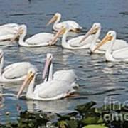 Plenty Of Pelicans Art Print