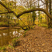 Plessey Woods Riverside Footpath Art Print