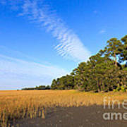 Pluff Mud And Salt Marsh At Hunting Island State Park Art Print